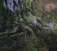 Percy Jackson : La mer des monstres- Photo